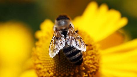 BBC2: 1e aflevering docu over bijen ... | Eetbare Stad | Scoop.it
