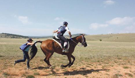 Un cheval breton champion du monde - Paysan Breton | Cheval et sport | Scoop.it