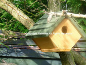 Diary Of A Wild Country Garden: Time To Put Up Nest Boxes   Helping  Domestic Animals And Wildlife   Scoop.it