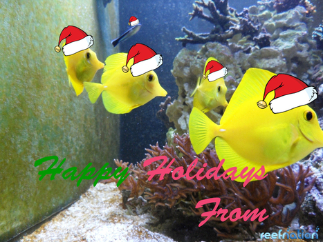 Happy Holidays From ReefNation | Reefs | Scoop.it