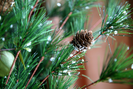 Christmas Tree Types   Christmas Trees and More   Scoop.it