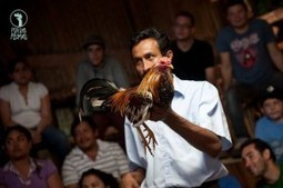 """Award Winning Costa Rican Movie: """"Por Las Plumas"""" (All About Feathers) 