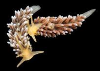 Denizens of the Deep: Alexander Semenov's Pictures of Undersea Creatures | READ WHAT I READ | Scoop.it