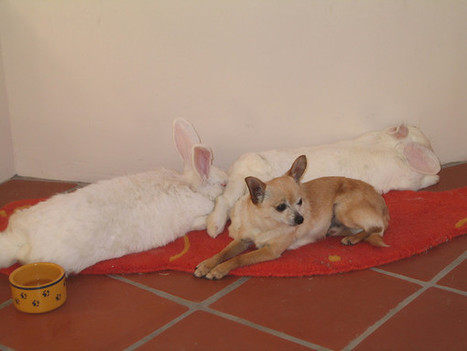 When Fido Met Thumper (Dogs and Rabbits)   Animals100   Scoop.it