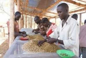 $ 3 millions de l'USAID à Nespresso et Technoserve pour le café au Sud Soudan | Histoires de capsules café | Scoop.it