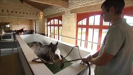 Spa et balnéo, une cure de remise en forme pour les chevaux au Pian-Médoc - France 3 Aquitaine | Cheval et sport | Scoop.it