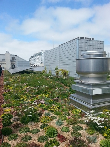 More Green Roofs Arriving to San Francisco | The Registry | Vertical Farm - Food Factory | Scoop.it