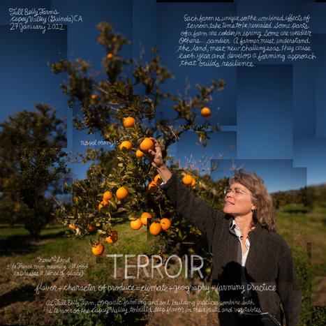 Lexicon Of Sustainability – The Food List: Terroir   Epicurist: In Victus Veritas   Scoop.it