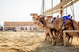 Iran reports MERS case; camel workers at increased risk | MERS-CoV | Scoop.it