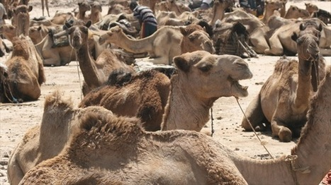 Archaeologists: Carbon-dated camel bones contradict biblical accounts | The Raw Story | enjoy yourself | Scoop.it