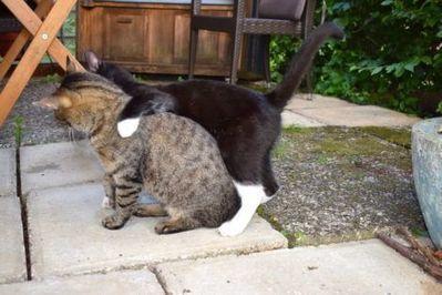 Vom Leben mit Kindern und Katzen   Das Elternhandbuch   Scoop.it