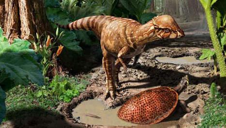 Dino ontdekt die kopstoten uitdeelde met harde schedel | KAP-ANGELO | Scoop.it