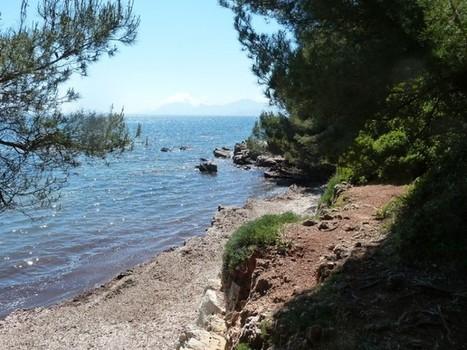 Sur l'île Sainte-Marguerite, l'amour fleurit les cerisiers - Destination France, le mag – J'aime la France   Côte d'Azur Tourisme   Scoop.it