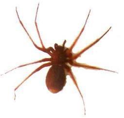 Significado dos Sonhos com Aranhas |Significados dos Sonhos | Viagens pela Net | Scoop.it