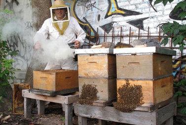 Survol de la saison apicole à Montréal - Nouvelles - Agriculture urbaine Montréal | Nourrir la ville | Scoop.it