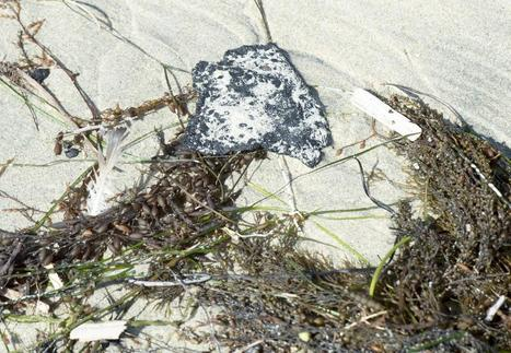 Watch your step: tar balls dotting the coast   Coastal Restoration   Scoop.it