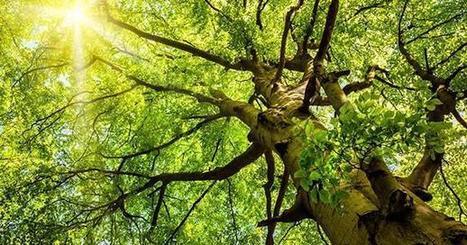 La forêt fait la pluie et le beau temps | Notre planète | Scoop.it