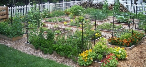 Gardening For Beginners : Who Said You Needed A Lot of Space? | Gardening | Scoop.it