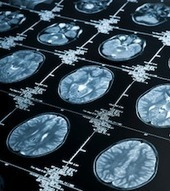 High-Stakes Decision Making: How Neuroscience Rescues Behavioral Finance | Coaching & Neuroscience | Scoop.it