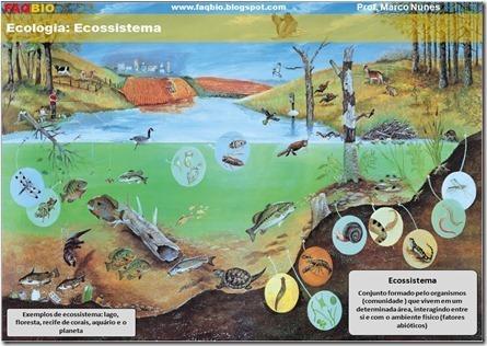 Conceito de Ecossistema | Biologia diario | Scoop.it