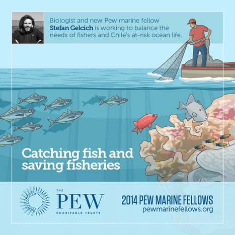Pew Awards Chilean Scientist Stefan Gelcich the 2014 Fellowship in Marine Conservation - The Pew Charitable Trusts | Fisheries3point0 | Scoop.it