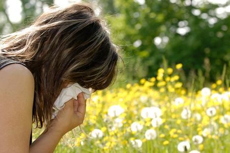 Allergie : 4 plantes dans le viseur des députés | Les envahisseurs | Scoop.it