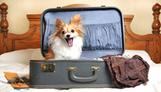 Pet-Friendly Hotels | Food for Pets | Scoop.it