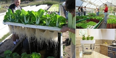 How To Make An Aquaponics System | Tilapia et jardin | Scoop.it