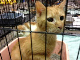Nearly 50 cats seized in Miamisburg raid - WDTN | The Funniest Cats In The World! | Scoop.it