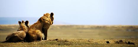 Gyantz.com: Camping Safaris Tanzania, Camping Tanzania, Tour Operators | Gyantz.com: Camping Safaris Tanzania | Scoop.it