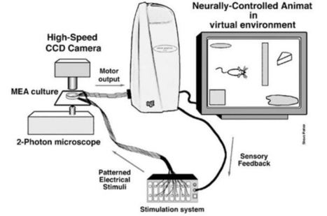 Network of brain cells models smart power grid | KurzweilAI | wrightmindweb | Scoop.it