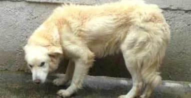 Cani paurosi: come aiutarli, in pratica? | Benessere animale | Scoop.it