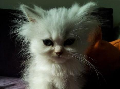 Comment défendre les animaux sans se faire traiter d'idiot? - Rue89 | Le flux d'Infogreen.lu | Scoop.it