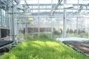 101 ways to try to grow Arabidopsis | Agricultural Biodiversity | Scoop.it