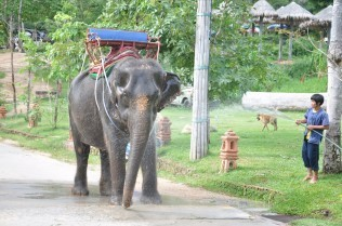 Elephant Exploitation for Tourism: From Zoos to Jungle Treks | Animals R Us | Scoop.it