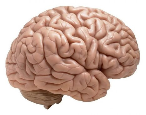 Bigger Brains Don't Mean Higher IQ | Neuroscience News | Brain Imaging and Neuroscience: The Good, The Bad, & The Ugly | Scoop.it