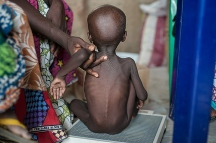Syrie, Yémen, Nigeria: agriculture décimée, la faim comme arme de guerre | Questions de développement ... | Scoop.it