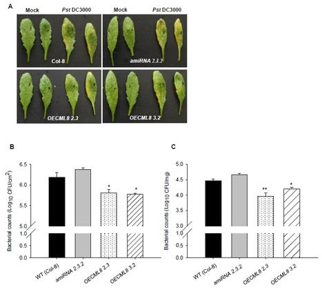 CML8, an Arabidopsis calmodulin-like protein plays a role in Pseudomonas syringae plant immunity | microbial pathogenesis and plant immunity | Scoop.it
