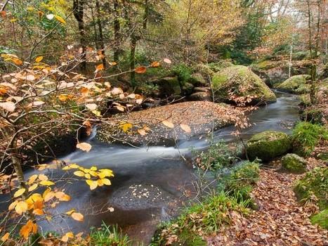 Bretagne - Finistère :  Rivière d'Argent dans la forêt à Huelgoat (7 photos) | Revue de Web par ClC | Scoop.it