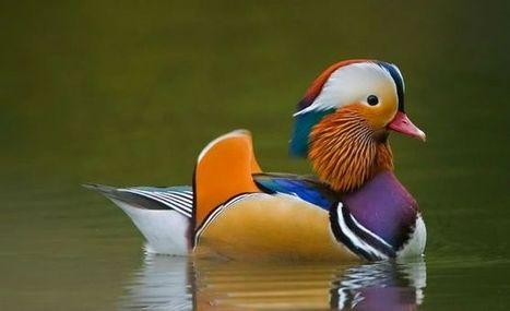Los animales más coloridos y espectaculares del planeta | Reflejos | Scoop.it