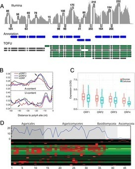 Widespread Polycistronic Transcripts in Fungi Revealed by Single-Molecule mRNA Sequencing | MycorWeb Plant-Microbe Interactions | Scoop.it
