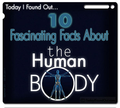 10 Interesting Facts About the Human Body - TechEBlog | NYL - News YOU Like | Scoop.it