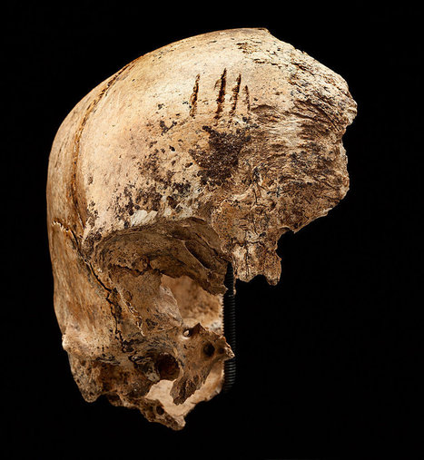 Evidence of Cannibalism Found at Jamestown Site | Gov't n Law | Scoop.it