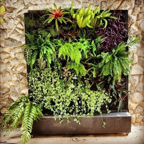 "Vertical Gardens, An ""Up"" And Coming Green Trend 