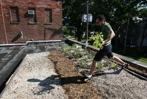 Sustainability advocates see promise in rooftop gardening | Vertical Farm - Food Factory | Scoop.it