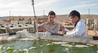 Israel Powereing Its Future With Algae Biofuel? | algae biofuel | Scoop.it