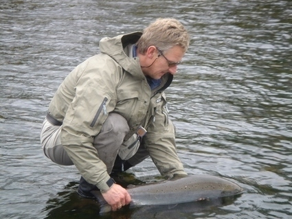 River Dee | fishing scotland | Scotland | Speyfly.co.uk - Fishing Tours & Holidays | Scoop.it