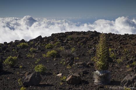Haleakala National Park   ❀ hawaiibuzz ❀   Scoop.it