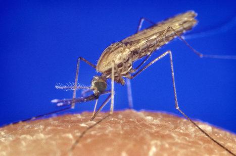 Les nanoparticules anti-moustiques - RFI | Les promesses des nanotechnologies | Scoop.it
