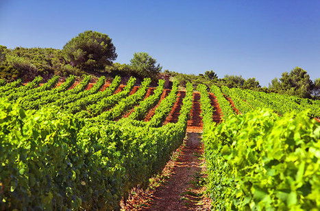 Tasting the future of #wine : Organic supervines | Le Vin en Grand - Vivez en Grand ! www.vinengrand.com | Scoop.it